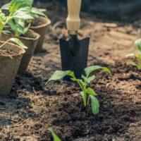 zahrada - výsadba